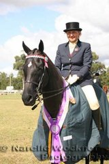 Champion Senior ASH Hack for the 3rd year in a row 'Kinmont Request' exhibited by Judy Rankin