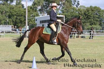 New to the Stock Horse scene and usually seen competing  in the Hack ring, Maughan Langer riding 'Ropeley Park Fugitive' owned by the Teys Family enjoyed the weekend with numerous placings