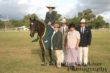 Hi Point Horse of The Show & Hi Point EMB Member was 'Glenwell Fort Ballinger' exhibited by Kate Whitaker with judges Kym & Ken Robinson, Judy & Malcolm Field
