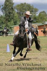Placed 2nd in the Senior Working Stallion 4 yrs & over 'Sandhurst Bonabbe' exhibited by Adrian McPhail & M,S & P.Crotty