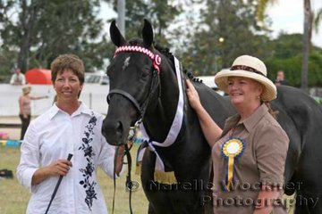 Champion Derivative Arabian Amateur Handler 'Aloha King's Realm' shown by Sally Genninges with judge Barbara Evans
