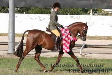 Supreme Purebred Arabian Under Saddle 'Ausden Centurian' ridden by Philippa Tyas