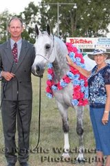Supreme Purebred Arabian Gelding 'Ausden Montage' exhibited by Helen Wright & shown by Christian Rebsdorf with judge Liz Salmon from USA