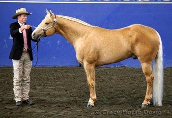 Good Prophecy & Greg McNamara won their 4yrs & Over Stallion class