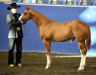 Delegation shown by Kath Peterson was Reserve State Champion in Weanling Colts