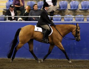 Paula DiCandillo came all the way from WA to compete with her gelding Winderadeen Gay Bar Mickey in Hunter Under Saddle