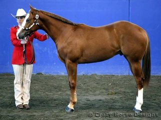 4th in yearling geldings was DNA Exquisite shown by Diane Kacunic