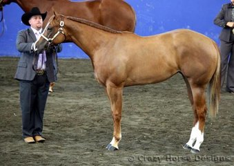 Grand Open & Amateur Mare was JVQ Touch Me Tease Me, shown by Tim French & Norm Wakeham