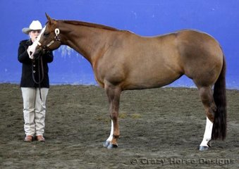 Open & Amateur Owner 4 yrs & over Mare State Champion was Wadayarekon Shes Magic