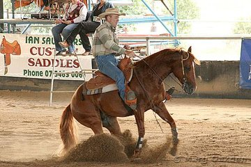 Imported stallion Rummin Dixie, owned & ridden by Bruce McLaughlin, competing in the Novice Horse Open.