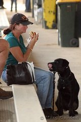 """""""Oh, my, that looks yummy, mummy,"""" is what this spectator's dog seems to be saying as he oggles his owner's lunch."""