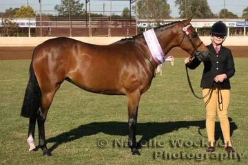 'Headley Park Fancy Affair' Champion First Season Led Show Pony over 12.2h & ne 14h shown by Kirsty Purcell