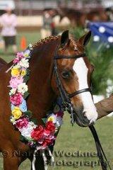Champion Open Led Small Show Hunter Pony ne 12.2h 'El'Ray Showpiece' exhibited by Brooke Langbecker