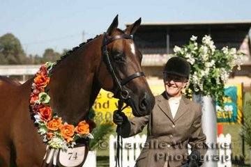Champion Open Led Show Hunter Galloway Hack 14.2h & ne 15h 'Clifford Park Classic Rose' exhibited by the Bower Family