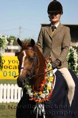 Champion First Season Show Hunter Pony Hack ne 14h 'Bellenbar Electric Amber' ridden by Linda Makejev and exhibited by Lyn Campbell
