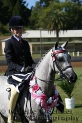Champion First Season Small Show Pony Hack ne 12.2h 'Whitmere Royal Ballet' exhibited by Pauline Oliver & ridden by Courtney Rabjones