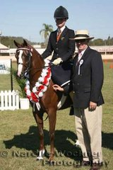 Champion First Season Large Show Pony Hack over 12.2h & ne 14h 'Rathowen Scarlet Ribbons' exhibited by P S & N George with judge Bruce Flood