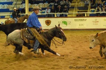 Tod Graham from Taroom Qld who notched up career earings of over a million dollars early this year, rode the One Stylish Pepto Syndicate's, colt One Stylish Pepto by Peptos Stylish Oak, to score 144.5 in the first go-round of the NCHA Open Futurity.