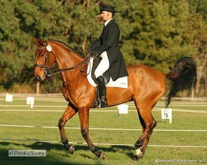 """David Middleton on """"Mr Shirvington"""" was leading the CNC** Dressage phase on the Saturday, but sadly didn't fare so well in the Cross Country, and withdrew from the Showjumping"""