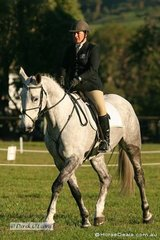 """Cindy Morrison on """"Raymond K"""" in the CNC* Dressage phase."""