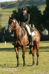 """Kathy Minchin on """"Nobody's Fool"""" in the CNC** Dressage, surrounded by the picturesque rolling slopes of the very lush Scott's Creek near Timboon, Dairy country."""