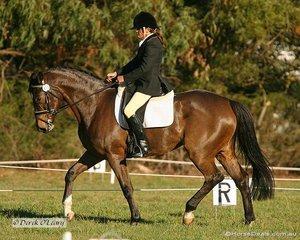 """Wendy Whiting on """"R.L. Daphne"""" in the Preliminary 1 Dressage phase."""