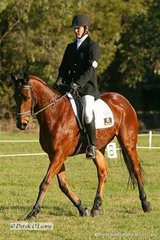 """Robert Goodwin riding """"Prince Rococo"""" in the Preliminary 1 Dressage phase. Robert placed 13th at the completion of all phases."""