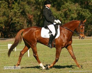 """Erin Garth in the Pre Novice Dressage phase riding """"""""De Jeune"""". Erin placed 7th at the completion of all phases."""