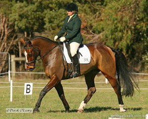 """Amy Walsh riding """"SC Ciquala"""" in the Preliminary Section 1. Amy went on to take out 1st place in the section at the completion of all phases, which shows how important a good dressage score can be in eventing."""