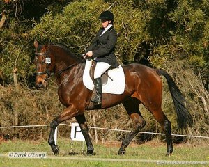 """Jacqueline Boyle in the Preliminary Section 2 Dressage phase riding """"Mount Marvellous"""""""
