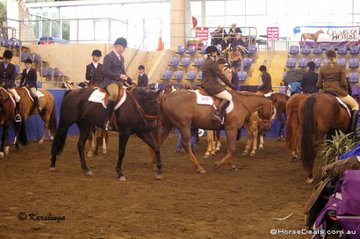 Beautifully behaved Quarter Horses in the extremely crowded (but dry!) marshalling area.