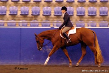 Chips Texas Rhythm and Emma Taggert competing in the 2 Year Old Hunter Under Saddle class.