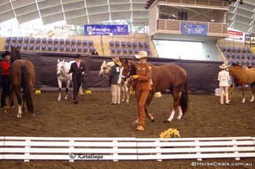Competitors warming up for the Showmanship classes.