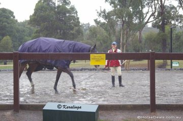 Foul weather over 3 days of the 5 day show had  everyone wishing for a 'lid' on the warm-up arena.
