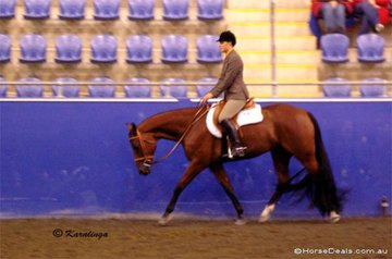 Lauryn Miletic putting in a winning ride on Triandabo Roc N Lynx in the Youth Hunter Under Saddle 15 - 18 Years.