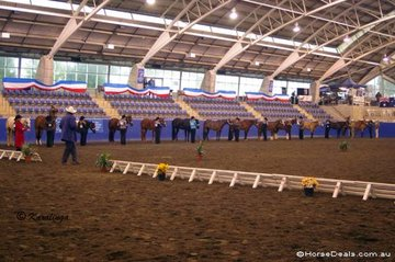 Lineup in the Amateur Owner Showmanship class.