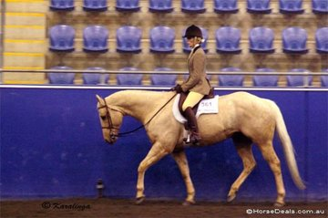 SSQ Gold Medal and Nikki Scott working in the Youth Hunter Under Saddle, 12 - 14 Years.