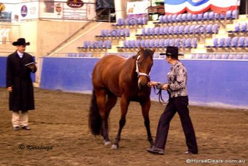 Trish Shug and her horse Winderadeen Shadows pivoting for the judge in the Amateur Owner Showmanship class.