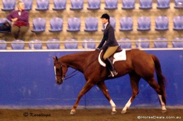 Winderadeen Dashtothebar and Cassandra Huyshe competing in the AmQHA (American Registered) All Age Hunter Under Saddle class.