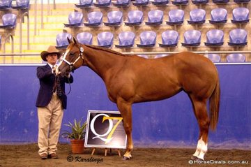 Norm Wakeham showed JVQ Touch Me Tease Me to a win in the Amatuer Yearling Filly class.