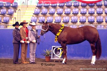 The Chapman family (L to R), Bev, Angie & Brooke, with their multi Championship winning mare, GSQ How D Miss Mytee.