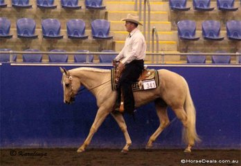 Competing in the 2 Year Old Western Pleasure was the Regnis family's Pretty Trendy Larry, ridden By Kyle Mobberly.