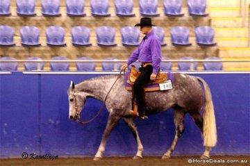 Harry Van Dyk & Radison competing in the Senior Horse Western Pleasure.
