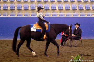 Rebecca Boyd & D Bar Colonel Jessie putting in a Reserve Champion workout for US judge Clay MacLeod.