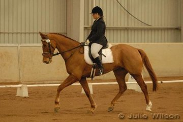 Tasmanian, Fleur Dewhurst rode her TBX, Benstock Marcus to score 64.5 in the dressage phase of the CCI*.