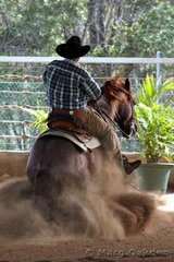 Scott Sutton showed Cristina Horton's roan stallion, Easta Lena, in the JFT Excavations & Cabling sponsored Horses 5 Years & Over Reining.