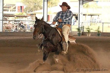Darren Simpson showing Docs Fancy Roy for owner Tania Powell in the Cyril Harris Auto Spares Rookies Professional Reining.