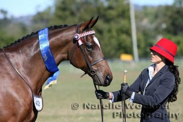 'Huntingfield Lodge Royal Victor' exhibited by Melissa Waller of Huntingfield Lodge won the Led Hack over 15hh
