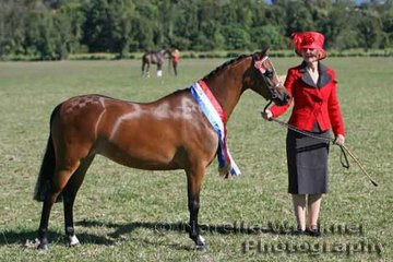 Champion Led Horse 2007 was the winner of the Led Small Pony 'Wattles Jezabelle' exhibited by the Swift Family also taking out the Champion Amateur Owner Rider Small Pony 2007 ridden by Jordan Swift