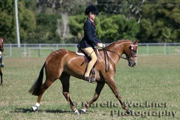 Reserve Champion Large Pony 2007 went to 'Rathowen Status Quo' ridden by Sophie Mead and owned by Jasmin Hunt